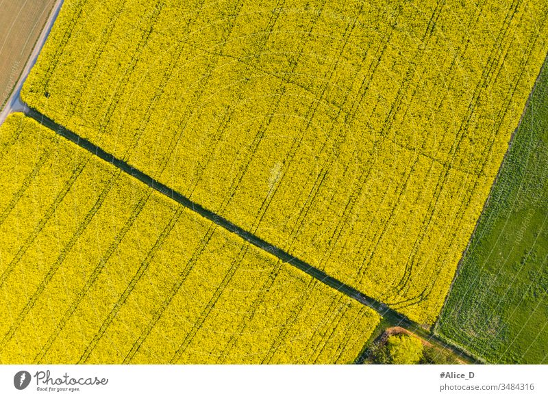 Aerial view of blooming Rape field  Nature Farmland from above aerial agricultural agriculture backdrop background bird's-eye bright canola color country