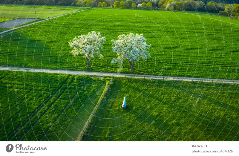 aerial view of spring blooming Fruit trees on  green agriculture fields  Remagen Germany above agricultural apple background branch countryside drone