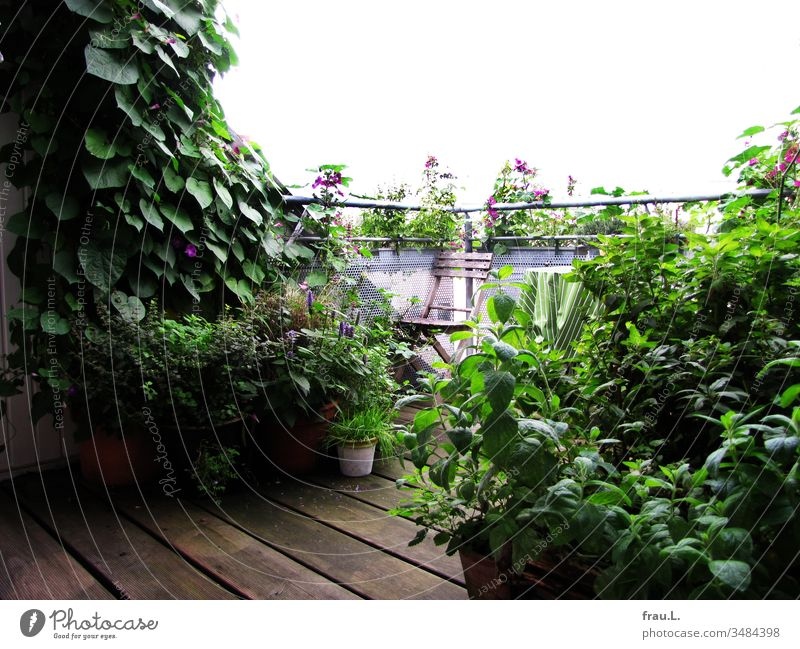 Herbs and flowers practiced jungle and conquered the roof terrace. Balcony Plant Exterior shot Flower Sunflower anisysop herbs Folding chair Flowerpot Mint