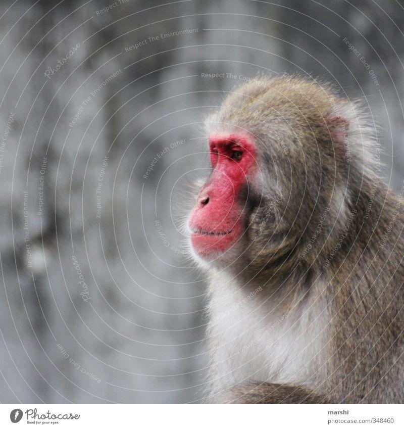 Nature Red Animal Brown Wild animal Pelt Animal face Zoo Exotic Monkeys
