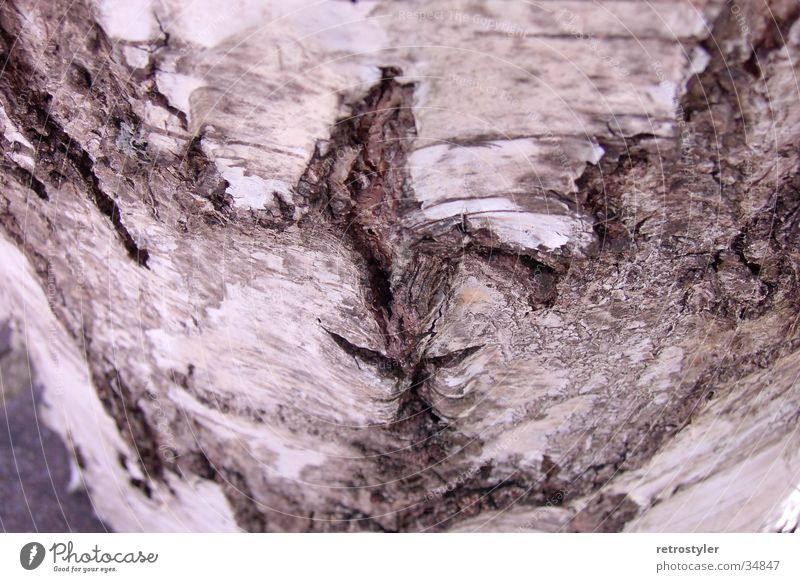 tree bark Tree Tree bark Pattern Birch tree Structures and shapes Macro (Extreme close-up) Close-up