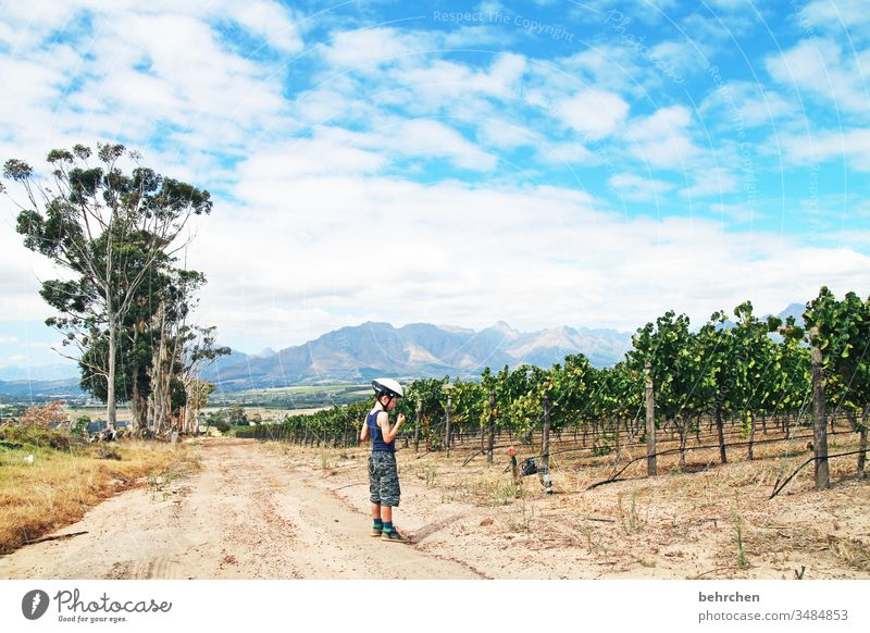 bikes 'n wines Sunlight Contrast Light Day Exterior shot Colour photo Lanes & trails already Fantastic Exceptional To enjoy Relaxation Stellenbosch South Africa