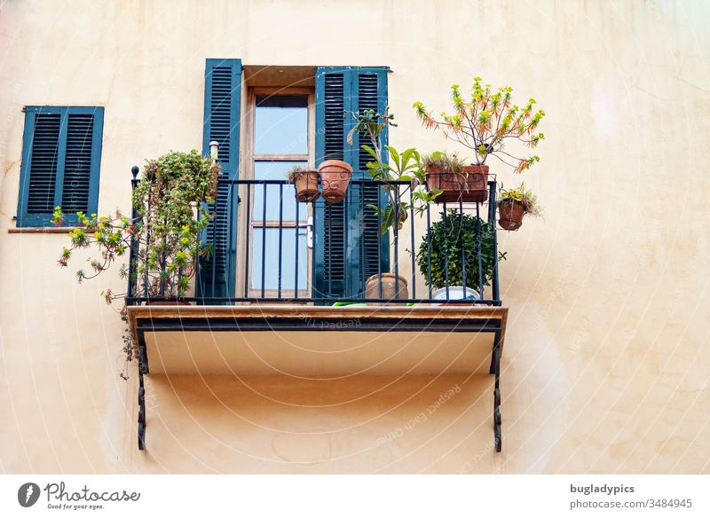 Mediterranean balcony with metal railing on which plants are placed in clay pots. The facade is painted in light terracotta and the shutters of the balcony door and window are dark blue or petrol