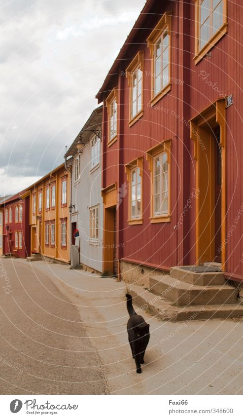 no one to see Village Old town Deserted mining town Facade Tourist Attraction Pet Cat 1 Animal Stone Concrete Wood Historic Orange Red Black Moody Beautiful