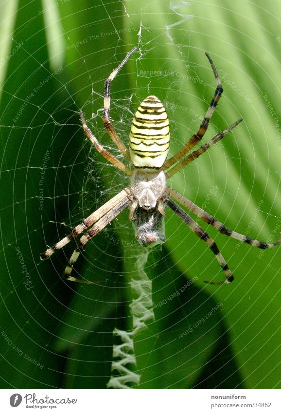 Spider with prey Leaf France Spider's web Black-and-yellow argiope Disgust Net Close-up Legs