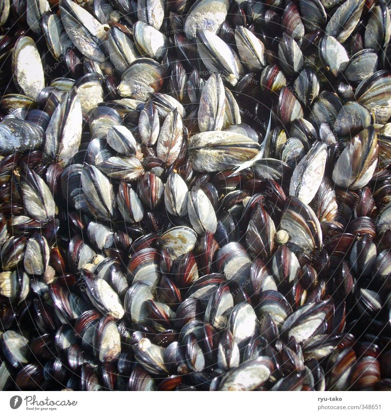snuggle up Animal Natural Multicoloured Mussel Many Accumulation Rock Consecutively Colour photo Deserted Bird's-eye view