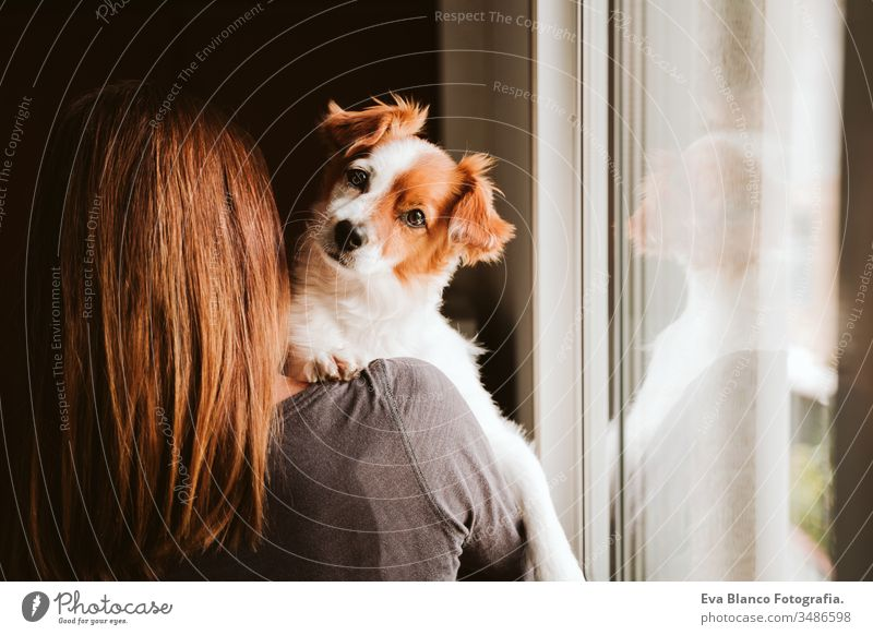 young woman and her cute dog at home by the window. back view indoors kiss love together togetherness daytime caucasian jack russell stay home stay safe