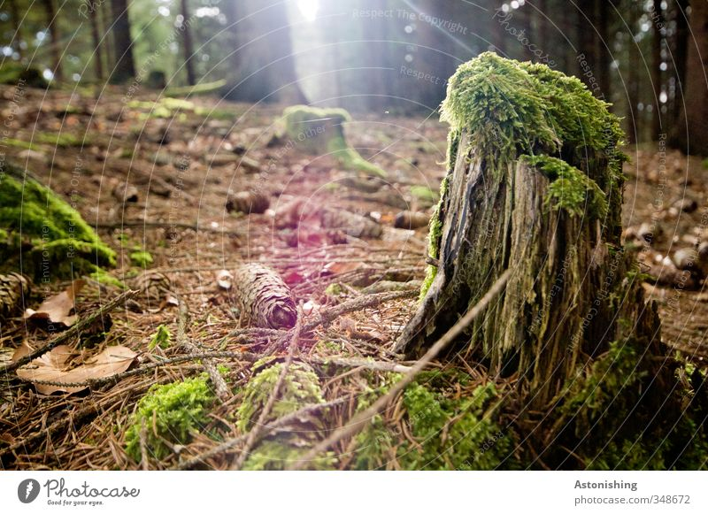 the penultimate rest of the tree Environment Nature Landscape Plant Earth Sun Sunlight Spring Weather Beautiful weather Warmth Tree Grass Moss Leaf Forest Wood