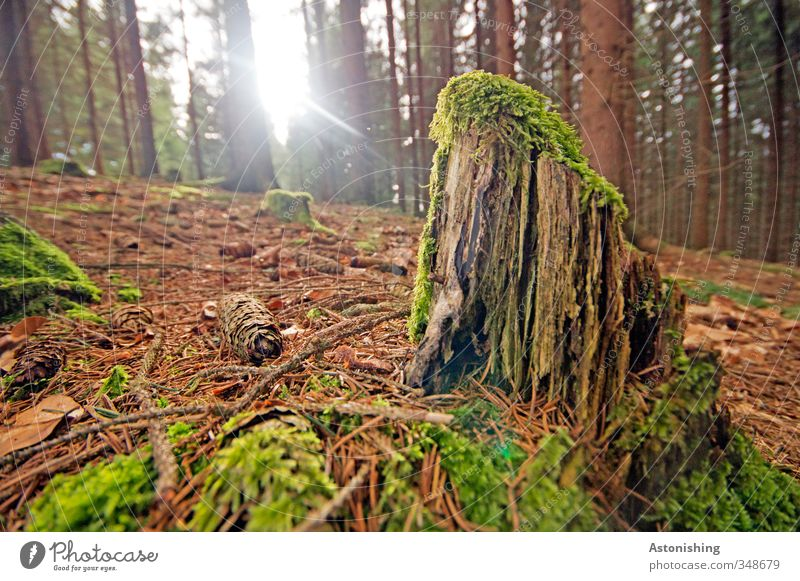 the last rest of the tree Environment Nature Landscape Plant Earth Sky Sun Sunlight Spring Weather Beautiful weather Warmth Tree Moss Leaf Forest Wood Stand