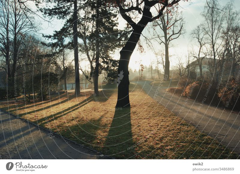 Paths and shadows Park trees Meadow Shadow Light Sun Sunlight Back-light Sunrise Spring Nature Colour photo Exterior shot Sunbeam Grass Environment Landscape