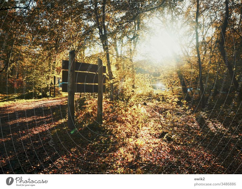 Darß, tri oaks Forest sign Autumn clearing Darss Sun Back-light luminescent Brilliant Sunlight flooded with light trees Bushes Woodground Lanes & trails Idyll