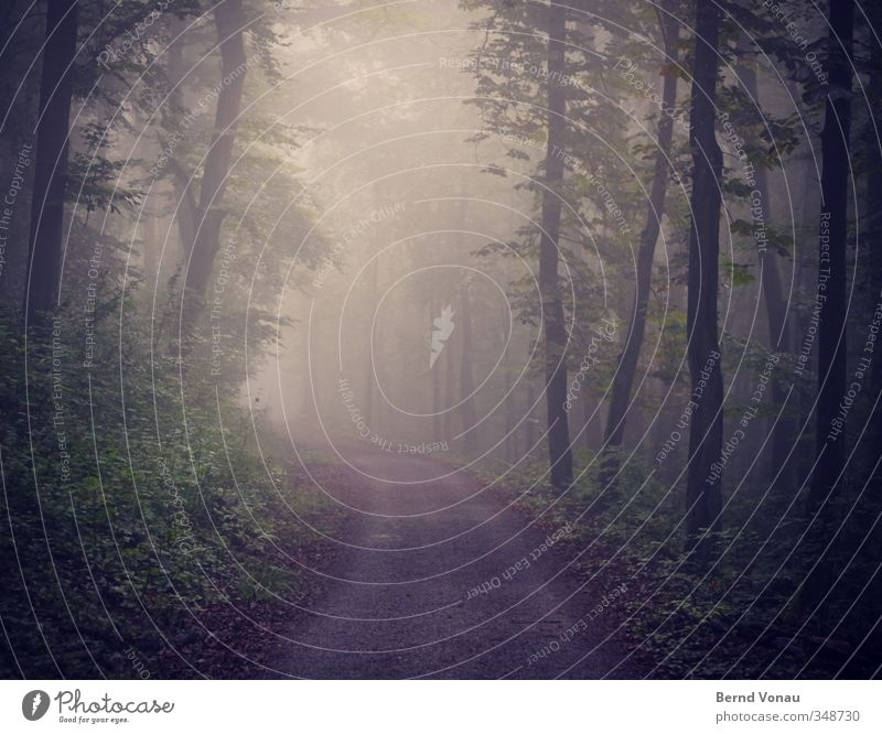 The forest awakens To go for a walk Hiking Environment Nature Animal Spring Fog Plant Tree Bushes Forest Bend Lanes & trails Discover Relaxation Going Looking