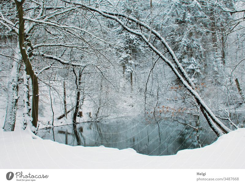Winter at the Blue Lake in the Teutoburg Forest Forest lake blue lake Snow Idyll Water chill Tree reflection White Gray Black Landscape Nature Environment Cold
