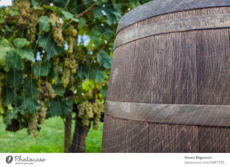 Vineyard italy grapevine vineyard field tuscany barrel season autumn winery agriculture farming farmland italian scene chianti countryside traditional europe