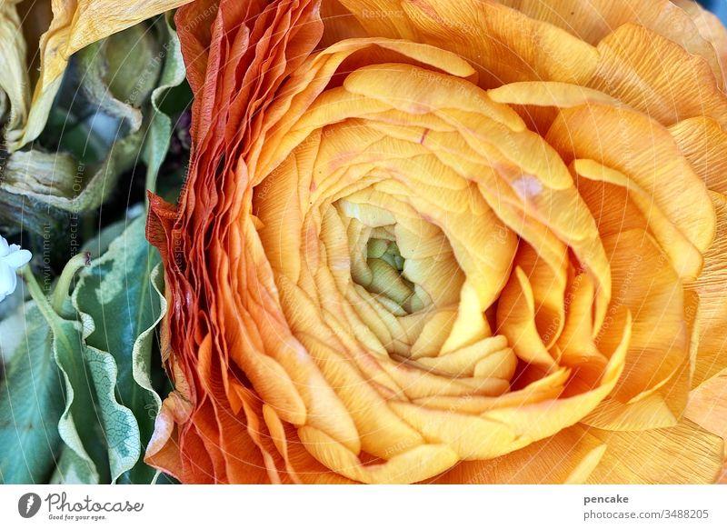 dreiklang | blumenampel Blüte verwelkt Ampel gelb rot grün Dreiklang Blütenblätter Natur Detail Pflanze Nahaufnahme Makro