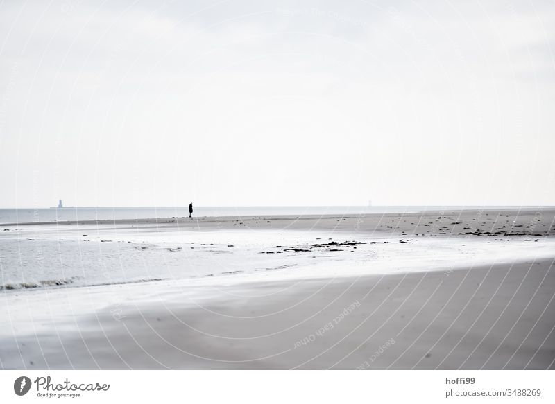 Man alone on the beach North Sea coast Human being Loneliness by oneself Beach Coast Ocean Exterior shot Island Relaxation Mud flats Sandy beach shallow water