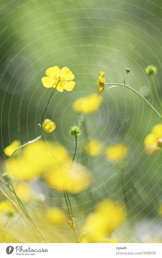 Nature Green Summer Plant Colour Flower Yellow Meadow Warmth Grass Spring Blossom Garden Bright Growth Illuminate