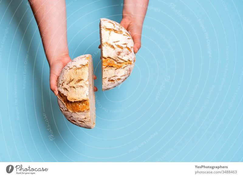 Bread sliced in two held in womans hands. Sourdough bread above view bake baked bakery baking bread blue background bread interior carbs comfort food crust cut