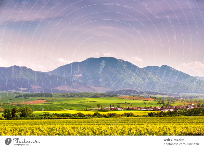 Spring yellow colza fields and green meadows in Tatras mountain valley. Slovakia rural scene. Blooming spring landscape. rapeseed hills grass bloom blossom
