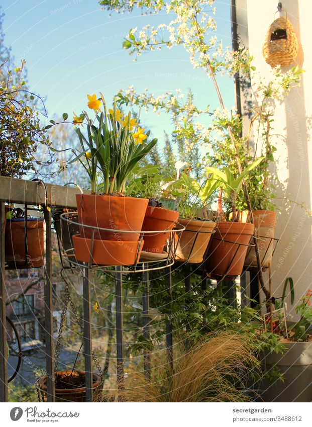 green thumb Balcony Balcony plant Gardening garden Gardener plants Clay pot sunny Green Brown Terracotta Nature Spring Close-up Style Exterior shot Summer