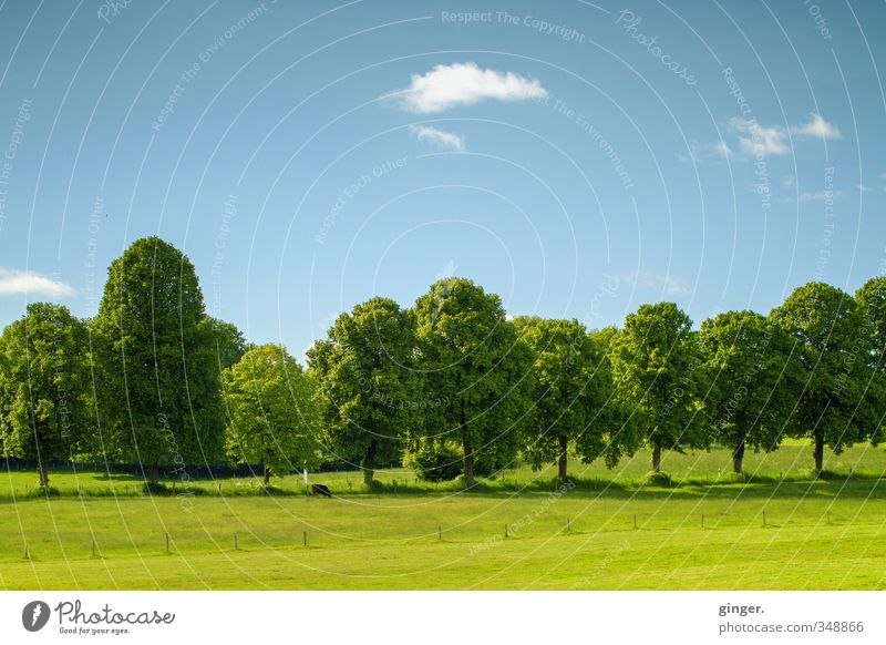 Well placed. Environment Nature Landscape Sky Clouds Spring Beautiful weather Warmth Plant Tree Foliage plant Meadow Field Cow 1 Animal Stand Growth Blue Green