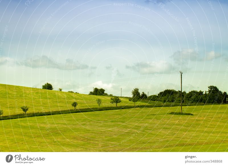 Sky Nature Blue Green Plant Tree Landscape Clouds Yellow Environment Meadow Grass Spring Line Horizon Air