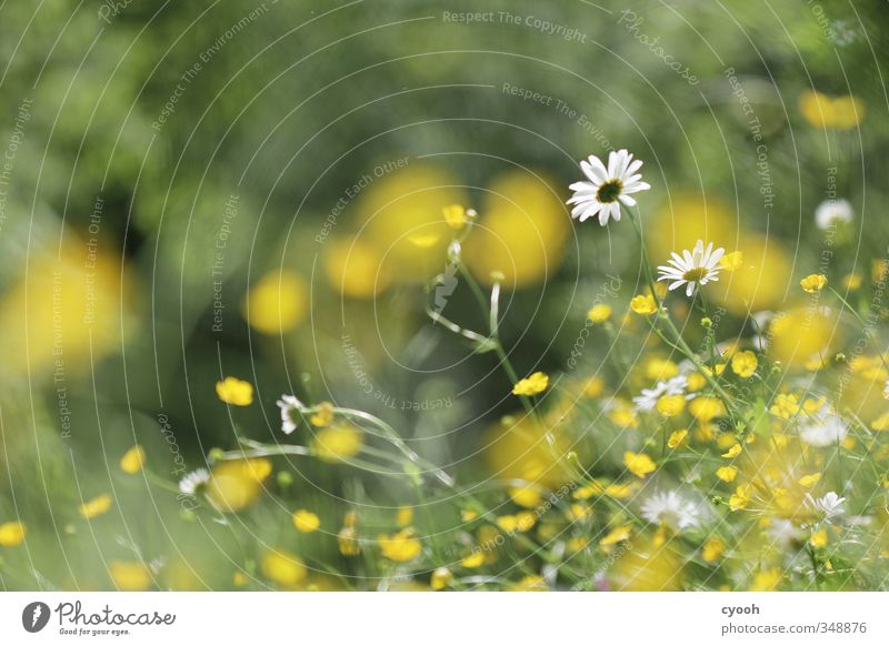 Nature Green White Summer Plant Flower Yellow Meadow Warmth Grass Movement Spring Freedom Blossom Garden Natural