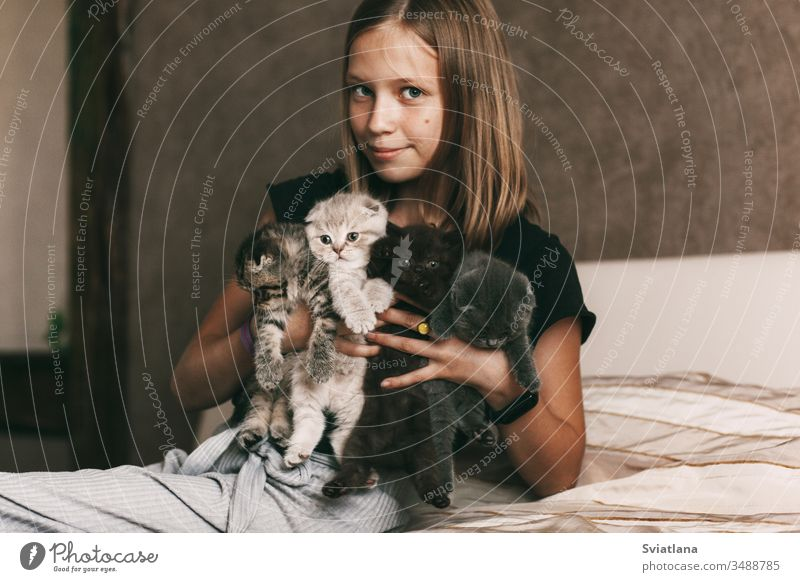 The child holds beautiful British kittens of different colors in the hands of background family tree love food man girl house cat nature face animal care