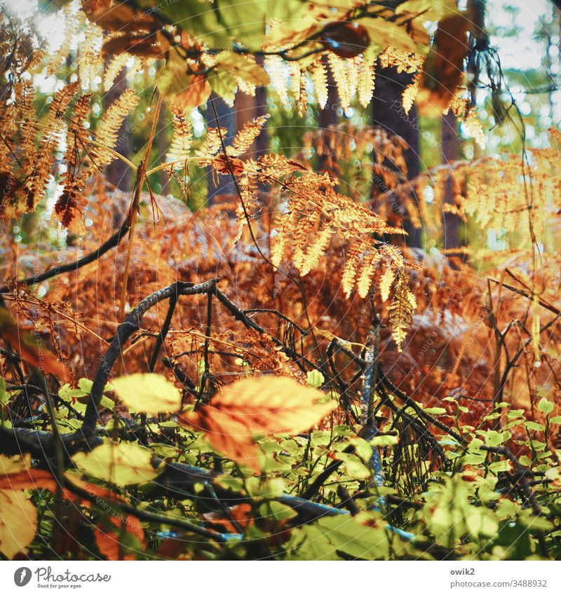 Forest, wild Darss leaves twigs Muddled Tree Twigs and branches Exterior shot Plant Deserted Environment Branch Autumn Green Brown golden Orange Yellow