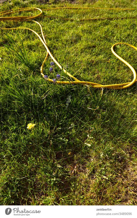 garden hose Hose Garden hose Water hose Irrigation Flower blossom Blossom Relaxation holidays spring Spring aridity Grass allotment Garden allotments Deserted