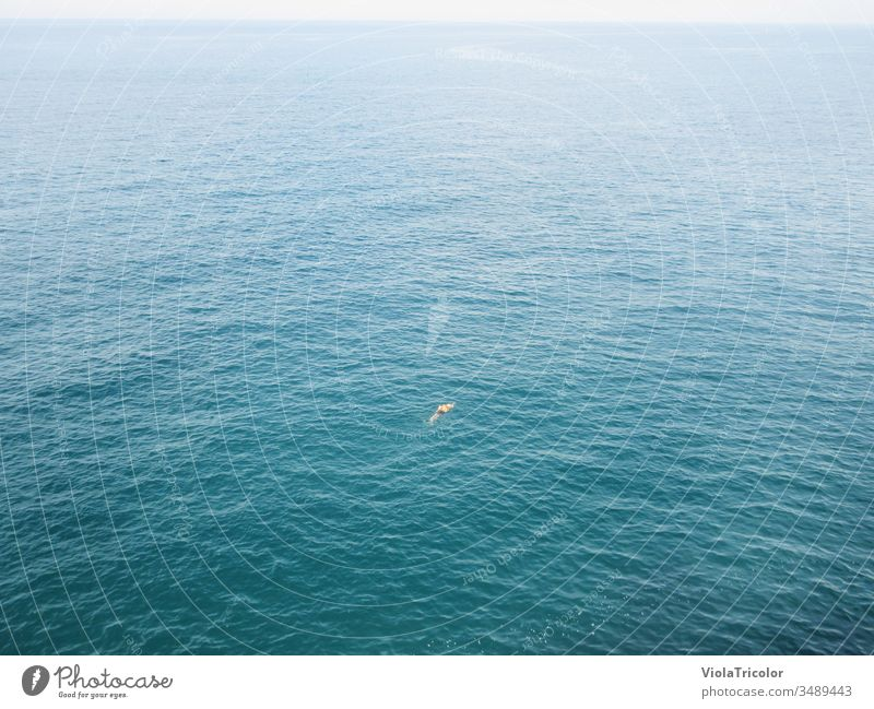 lonesome swimmer in the sea be afloat Ocean Water on one's own Lonely Free gap Freedom Sports Aquatics wide Blue Horizon vacation Bird's-eye view