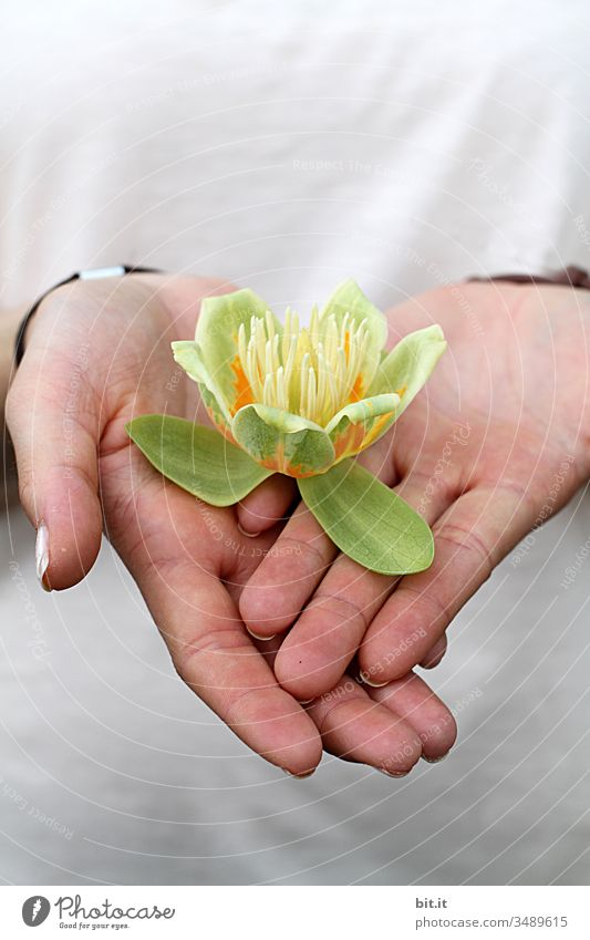 Carry on hands. Flower Flowering plant Blossom Hand stop Plant Nature Blossom leave Blossoming Spring Green Beautiful Summer Garden Close-up Yellow Bud bud