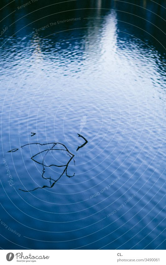 water's surface Water Surface of water Twig Twigs and branches Abstract Lake Pond Water reflection Reflection Esthetic Deserted Exterior shot Nature