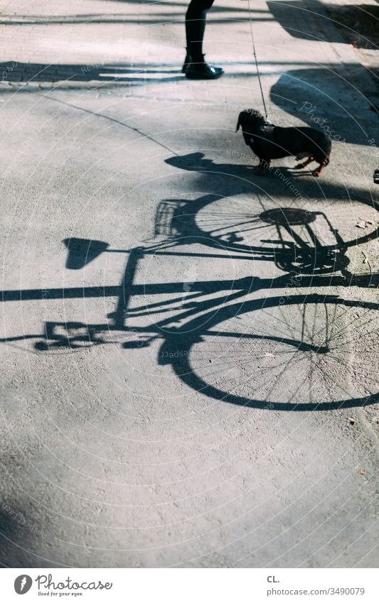 bike, dachshund, legs Bicycle Dog Dachshund Legs Lanes & trails Shadow Shadow play person Street Animal Pet Love of animals Exterior shot Cute