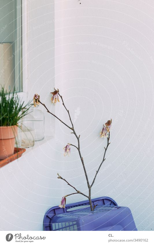 twig on laundry basket Twig Twigs and branches Bud bleed Blossoming Laundry basket Plant Window Balcony Pot plant Flowerpot Living or residing at home