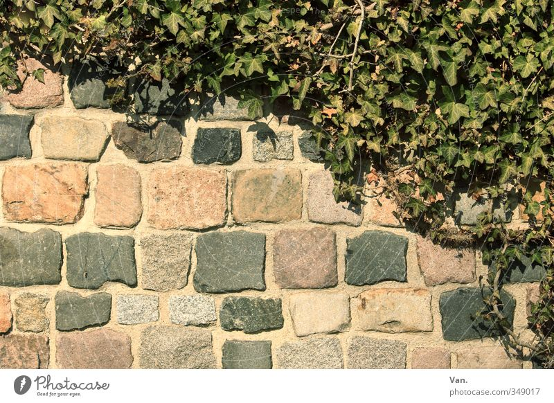 \ Nature Spring Plant Ivy Wall (barrier) Wall (building) Stone Yellow Green Colour photo Subdued colour Exterior shot Deserted Copy Space bottom Day Contrast