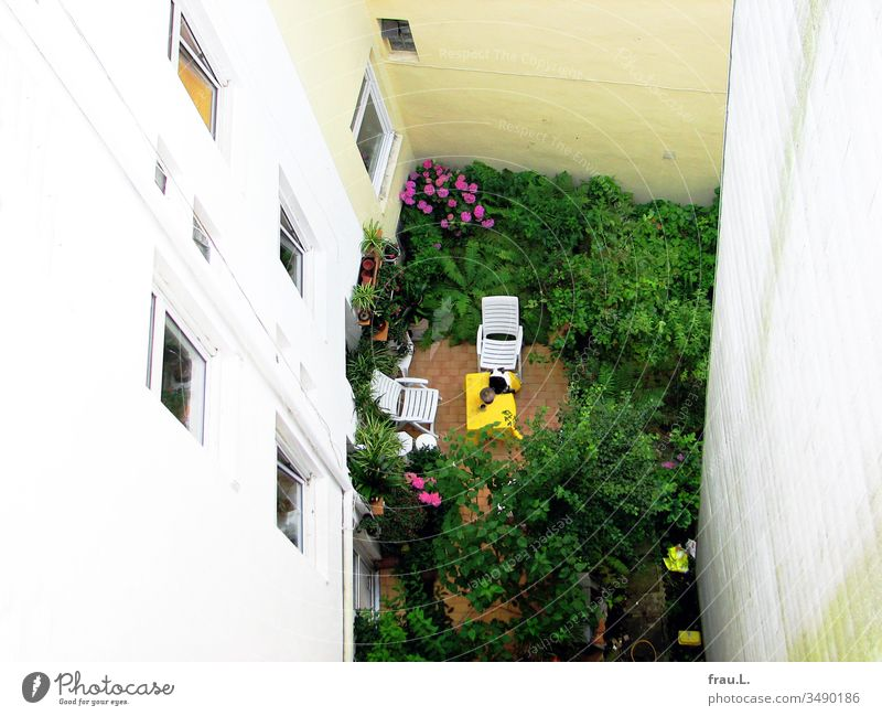 Between the canyons of the houses the cat found the green and flowering spot wonderful for a relaxed nap. Backyard Facades Town Exterior shot Deserted Cat