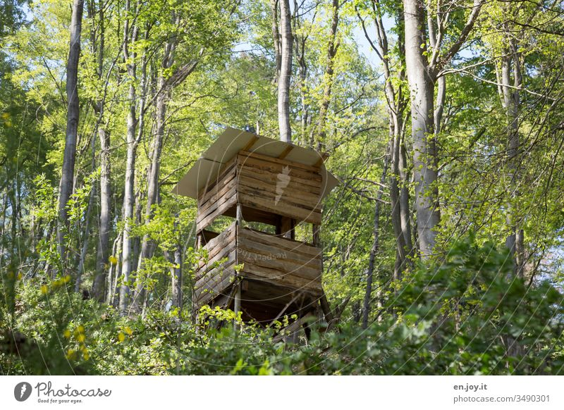 High seat for hunters in the forest Forest Hunting Blind Hunter hunter's seat hunter's hut Green Nature trees deciduous trees Holtzhütte Landscape Exterior shot