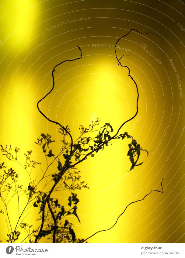Plant Warmth Bushes Decoration Physics Twig Neon light Flashy
