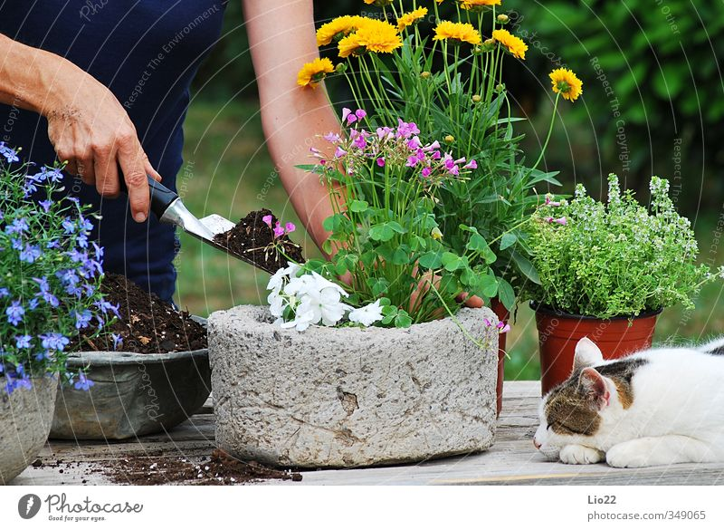 Flower planting Leisure and hobbies Gardening Gardener Earth Plant Grass Leaf Blossom Pot plant Work and employment Colour photo Exterior shot Day