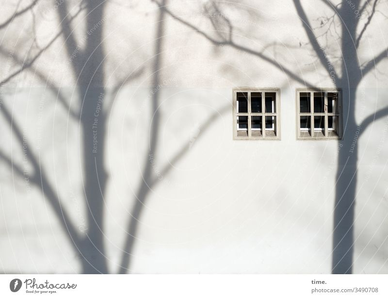 stage design | architecture and nature Shadow Wall (building) Window Tree Wall (barrier) dwell evening light sunny shady Pattern structure Branch