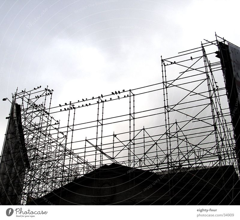 Clouds Bird Architecture Sit Construction site Underground Train station Pigeon Rod Scaffold Crow