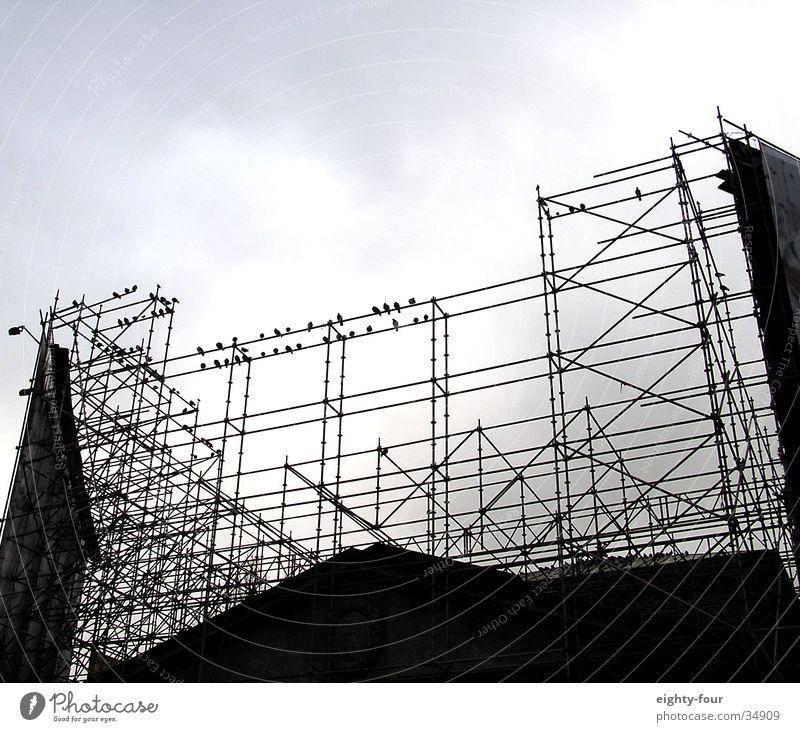 Clouds Bird Architecture Sit Construction site Underground Train station Pigeon Rod Scaffold Crow