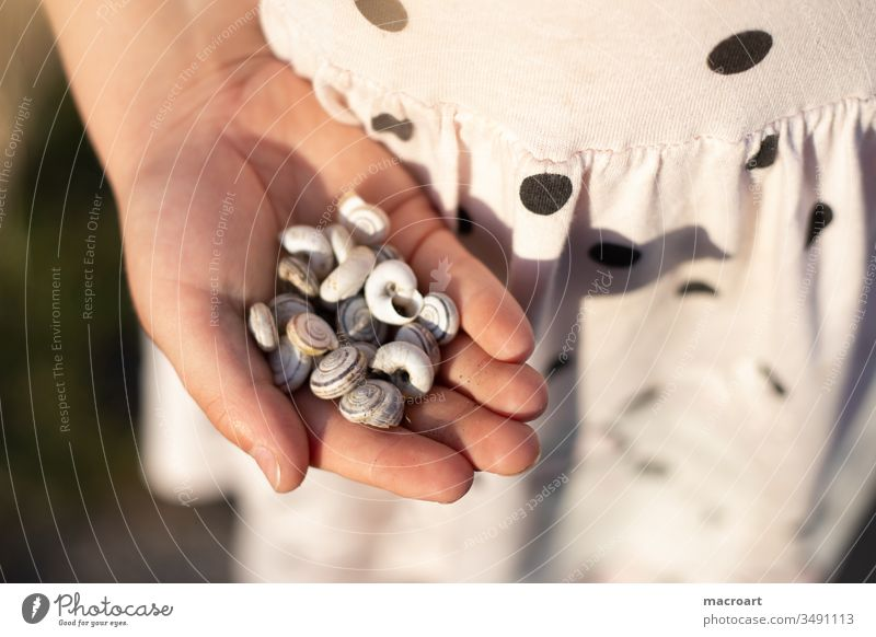 Child collects snail shells Snail shell forsake sb./sth. Empty Collection amass hands children's hands points Spotted feminine Girl Schoolchild Discover