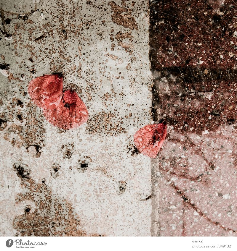 Nature Water Plant Red Environment Sadness Small Stone Natural Weather Climate Wet Concrete Gloomy Drops of water Simple