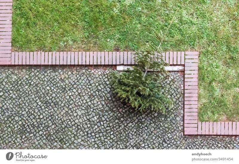 The Christmas tree is at the end of the cobblestone away Background branch branches christmas christmas tree city dead decoration disposal dispose dying fall