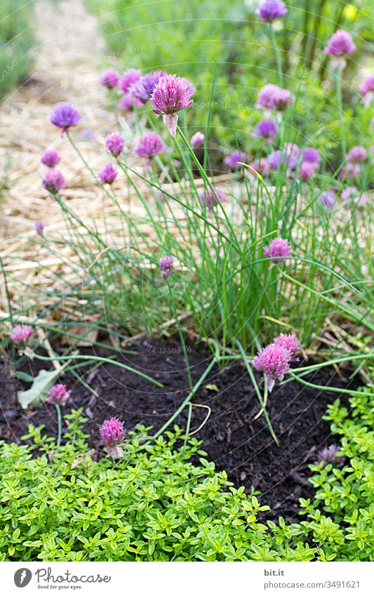There's an herb for everything, almost. Chives Garden Earth Green Plant Herbs and spices Fresh Nature Agricultural crop Organic produce Nutrition Healthy