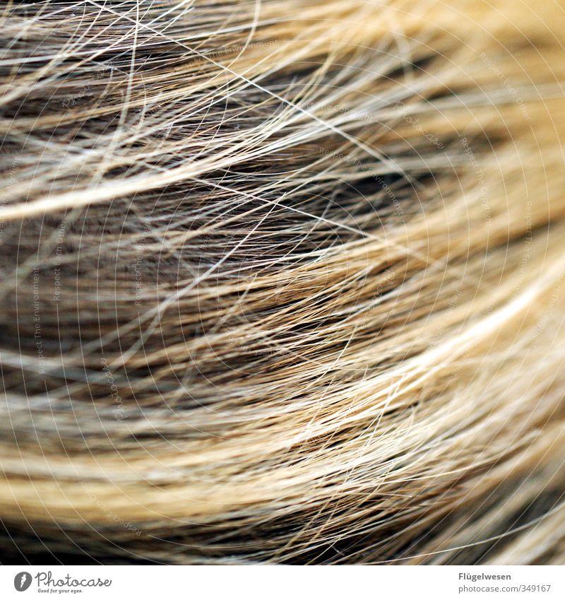 hairy affair Lifestyle Beautiful Personal hygiene Body Hair and hairstyles Skin Face Swimming & Bathing Haircut Strand of hair Shock of hair Hair colour