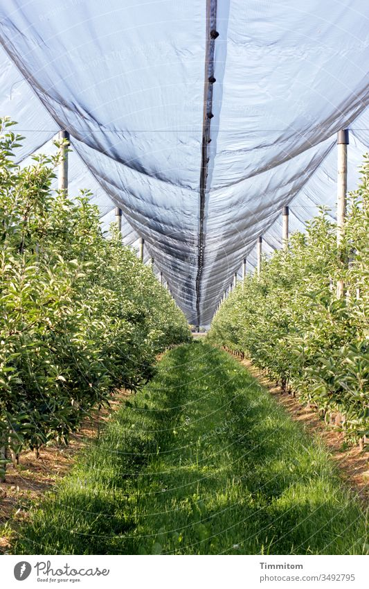 Growth accelerator Plantation fruit Covers (Construction) tarpaulin Protection plants Tracks Exterior shot Deserted green Agriculture Plastic Nature