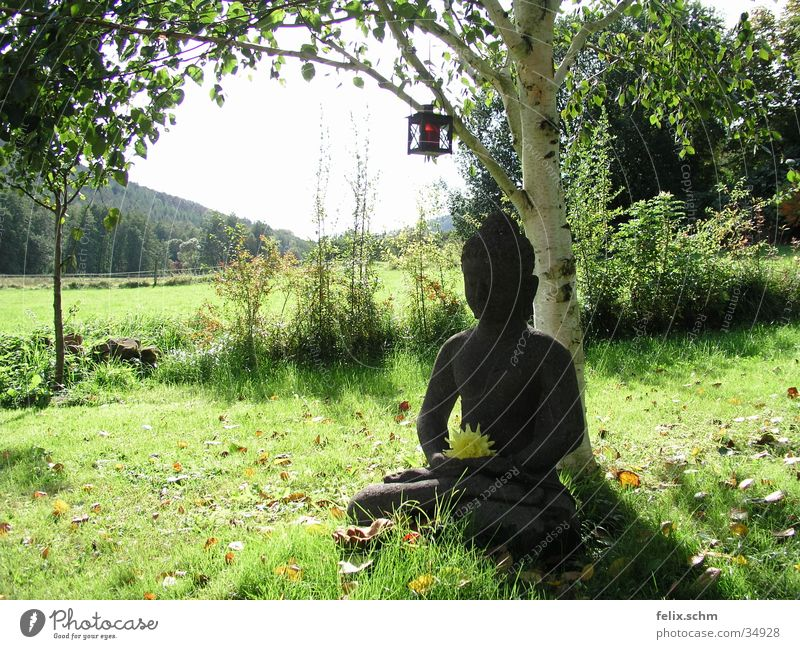 Buddha Garden Relaxation Calm Sun Sculpture Nature Tree Grass Bushes Park Meadow Stone Green Peaceful Wisdom Idyll Birch tree Statue Esotericism Buddhism